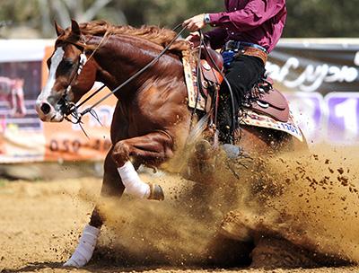 horse veterinarian, equine reproduction, horse vet near me, dr quinn gavaga, charles ranch, charles ranch equine, performance horse medicine
